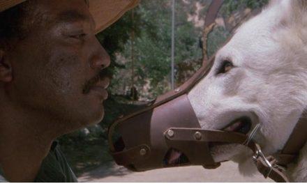 'Cão Branco': um filme maldito, mas uma poderosa obra anti-racista