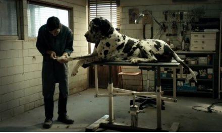 Casting canino de 'Dogman' conquista Palm Dog de Cannes