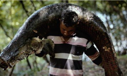 Série 'Amazônia Legal' estreia na TV Ufam nesta sexta-feira
