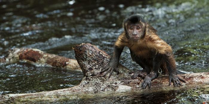 Amazônia, de Thierry Ragobert