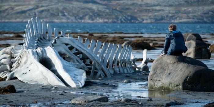 Rússia escolhe Leviathan para o Oscar 2015