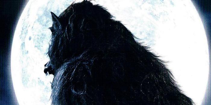 Especial Terror – 5 Filmes de Lobisomens Que Você Precisa ver
