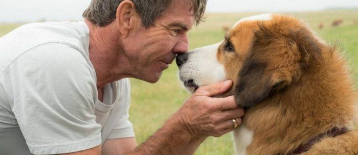 'Quatro Vidas de um Cachorro' deve ganhar continuação